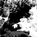 Julie Gilbert Pollard - Dutchman's Gold - Black & White Cutout - The Photo