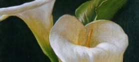 David Hardy – Calla Lily Duo – 8″x 12″ – Oil