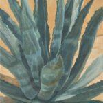 Garden Agave by Brenda Howell